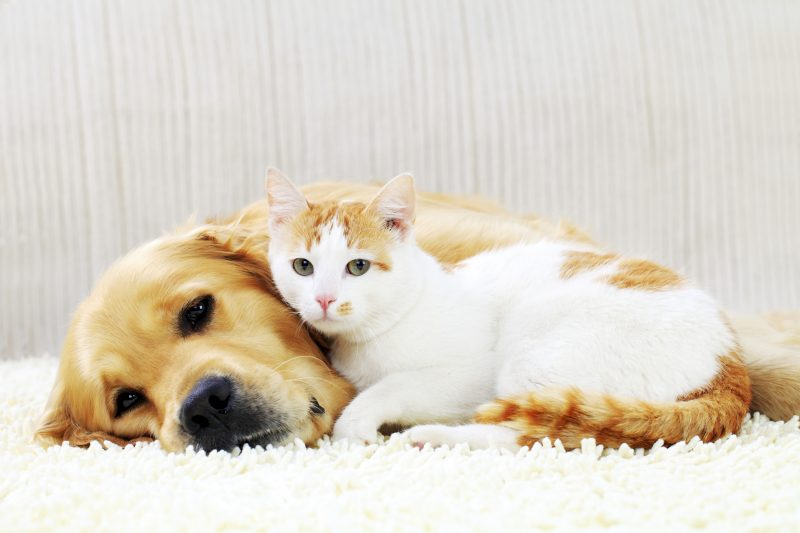 pet stain and odor removal spokane